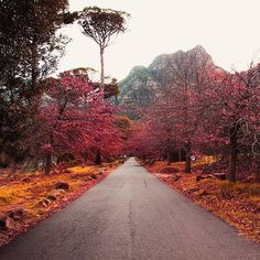 Is anybody else fall-ing for Autumn in #SouthAfrica? Photo credit: @chloejeanellis on Instagram.