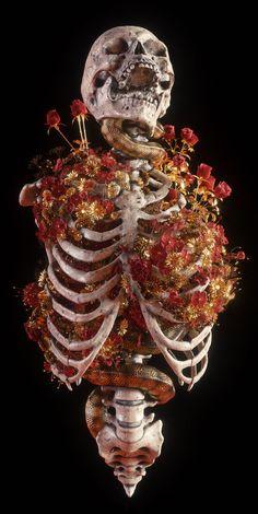 Darkly Elegant Digital Skull Art by Billelis – Graffiti World Arte Com Grey's Anatomy, Anatomy Art, Skull Reference, Pose Reference, Skeleton Art, 3d Drawings, Drawing Faces, Drawing Hair, Drawing Drawing