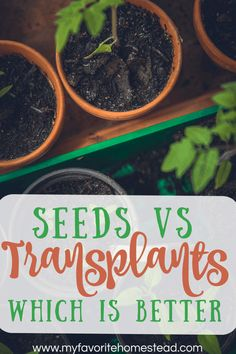 If you decide to start growing your own vegetables in your backyard garden, you have some choices to make. Which plants are worth staring from seeds and which ones should you buy transplants for maximum yield. Learn which is best. Vegetable Garden For Beginners, Starting A Vegetable Garden, Backyard Vegetable Gardens, Gardening For Beginners, Buy Plants, Small Plants, Growing Sweet Corn, Lettuce Seeds, Green Living Tips