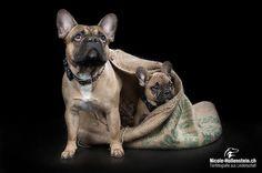 #dog #frenchbulldog #dogs #pet #puppy #hunde