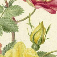 Flowers-Verzameld werk van Ekaterina - Alle Rijksstudio's - Rijksstudio - Rijksmuseum