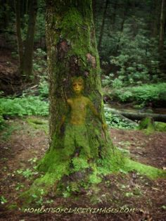 Druids Trees:  A young tree spirit.