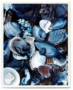 The beautiful colors of indigo blue in shells and ocean atmosphere. Azul Indigo, Bleu Indigo, Mood Indigo, Le Grand Bleu, Everything Is Blue, Photocollage, Blue Aesthetic, Water Aesthetic, Beach Aesthetic