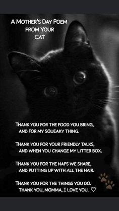 Cat Quotes, Animal Quotes, Crazy Cat Lady, Crazy Cats, Beautiful Cats, Animals Beautiful, Cat Poems, Black Cat Art, Black Cats