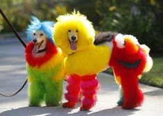 Top 21 Funny and cute poodles - Buzzle Share