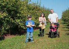 Apple Picking at Smolak Farms