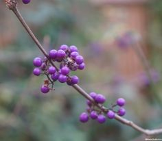 January gardening tasks & design ideas is based on some of the topics covered in Plews Gardening Lessons, particularly the Year in Your Garden Course - http://plews.gd/2l4gA4M