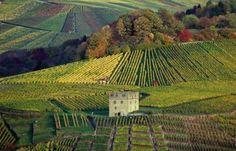 STUTTGART:   Stuttgart wine country