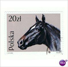 POLAND STAMP - HORSE