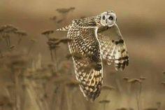 Gorgeous Owl:-)