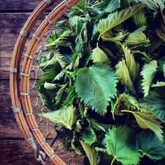 Stinging Nettles are a premier blood builder and nutritive tonic, as they are very high in calcium, magnesium, iron and Vitamins A and C.