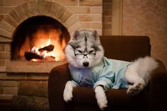 Você não vai resistir ao encanto desses adoráveis huskies siberianos posando como modelos!