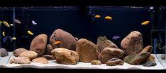 Click image for larger version Name: Views: 1469 Size: KB ID: 18226 Big Aquarium, Glass Aquarium, Aquarium Design, Aquarium Ideas, Biotope Aquarium, Cichlid Aquarium, Fish Aquariums, African Cichlids, Malawi Cichlids