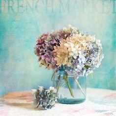 #hydrangea fine art print home decor pastel by VintageChicImages #wallart #shabbychic #flowers #floral #stilllife #homedecor #etsy