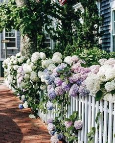 On this New England island, every building appears as though it were created expressly for a storybook. Dotted with quaint shingled cottages and sprawling guesthouses, Nantucket is a welcome retreat f Hydrangea Not Blooming, Hydrangea Garden, Hydrangeas, Flowers Garden, Victoria Magazine, Garden Cottage, Dream Garden, Garden Inspiration, Beautiful Gardens