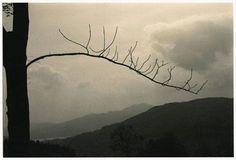 Masao Yamamoto - Artistic Photography