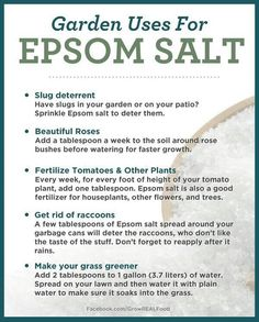 There are so many different ways to use Epsom Salt. I LOVE finding new natural remedies     #naturalremedies #natural #holistic #holistichealth #epsomsalt #holistichealing #gardening #mothernature #naturelover #loveandlight #allnatural #mindbodysoul #nature #gardeninglife Garden Tips, Epsom Salt, Gardens, Roses, Outdoor Gardens, Rose, Garden, Backyards