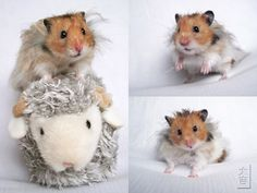 Post your hamster's species, fur type, pattern, and name! - Page 2 ...