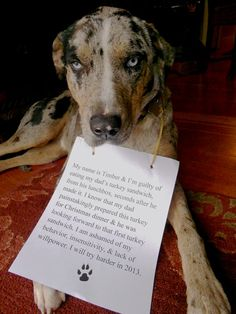 Dog Shaming! This is Timber our Catahoula Leopard Dog...she's in TROUBLE!