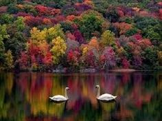 Image result for beautiful nature