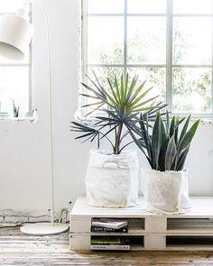 DIY • al helemaal fan van linnen? De eenvoud die het uitstraalt zorg voor een mooi, rustgevend effect. Het contrast tussen linnen en groen, puur natuur. Je maakt deze eenvoudige plantenzak supersnel! Bekijk de stappen op vtwonen.nl/diy