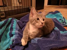 http://ift.tt/2t3dui8 adopted this little guy and his brother last weekend!
