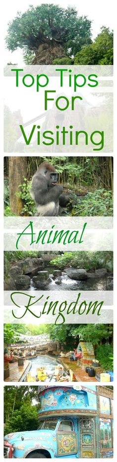 Our tops tips on getting the best from Animal Kingdom, Walt disney World