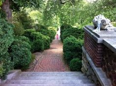 Dumbarton Oaks - the scent of old, old boxwood...