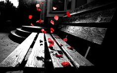 Topic 2: Photography  This particular photo is effective because the flower petals are falling which leads your eye down to the bench and also because of the color splash.__________________  Original description: Colorsplash Falling Rose Petals