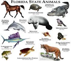 florida_animals_large.jpg 750×651 pixels
