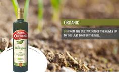 Extra Virgin Olive Oil - ORGANIC -