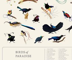 What a fantastic poster! Beautiful Birds, Childrens Books, Cute, Movie Posters, Children's Books, Children Books, Kid Books, Kawaii, Film Poster