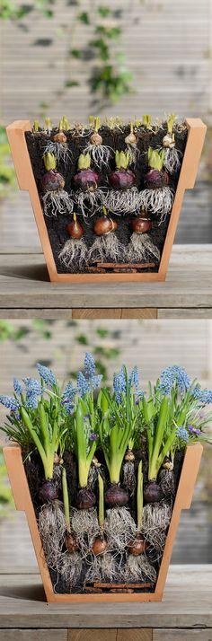 Maj, Garden Plants, Terrarium, Succulents, Delft, Vegetables, Nature, Flowers, Pink
