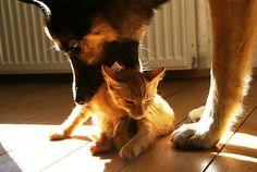 Hund und Katze – Gemeinsamkeiten und Unterschiede