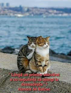 Crazy Cat Lady, Crazy Cats, My Person, Good Morning Good Night, When You Know, How I Feel, I Love Cats, Funny Cats, Relationship