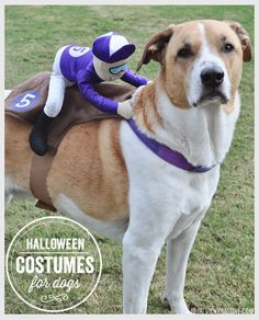 Halloween Costumes for Dogs : Last minute pet costumes with Amazon two day shipping!