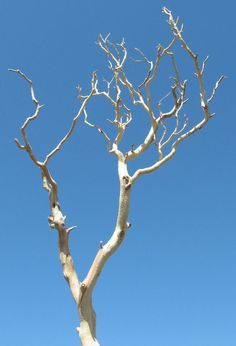 Manzinita branch....cool