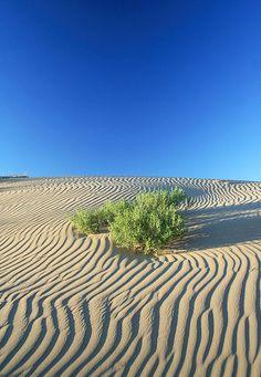 oxane:    20080612 Gobi Desert, Mongolia 001 by gakout