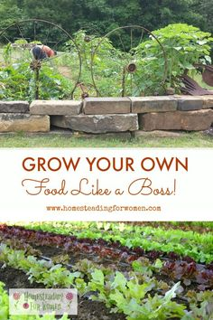 Growing Your Own Food- Like a Boss! Wondering if you should grow your own food? Here are some benefits you will get if you do.