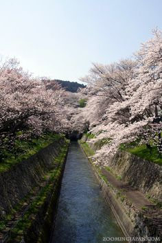 Spring is around the corner. Can't wait for the cherry blossoms to be in full bloom! ^^