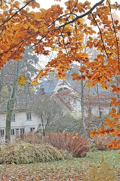 Vibeke ДИЗАЙН: Осень Вдохновение