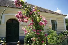 Roses everywhere. Open Air, Roses, Gardens, Plants, Pink, Garden, Flora, Rose, Plant