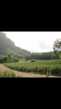 Pineapple field on island of Moorea. ATV tour. Tahiti , French Polynesia