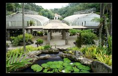Jardim Botanico — in São Paulo, Brazil.
