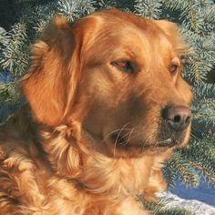 i love golden retrivers favorite-dogs