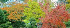 - Como Escolher e Plantar Árvores no seu Jardim?  Se vocêtem espaço no jardim e começa a planejar quais plantas colocar, as primeiras da lista sempre serão as árvores que farão parte da paisagem.Elas são a espinha dorsal e a estrutura vegetal mais permanente de um jardim. Arbustos e herbáceas ... - http://www.ecoinseticida.com.br/ecoblog/2016/11/01/2417/