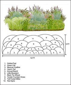 ornamental grass design ideas, ( would have to be adapted to our zone)