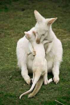 The Animals, Baby Animals Pictures, Animals Images, Cute Baby Animals, Funny Animals, Wild Animals, Farm Animals, Amazing Animals, Animals Beautiful