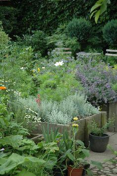 Kitchen herb garden | jardin d'herbes aromatiques