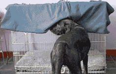 Tira cheiro de cachorro do sofá 1 litro de água ½ copo de vinagre álcool 1 colh.sopa bicarbonato bem cheio ¼ de copo de álcool 1 colh. sopa amaciante  roupa. Misture em recipiente (nesta ordem: água, álcool, bicarbonato, vinagre e amaciante) mexa bem  coloque a mistura em borrifador. Aplique em todo o sofá, borrifar a distância de uns 40cm.Se necessário repita o processo, o cheiro vai diminuir com o tempo. Vinagre reaviva cores, bicarbonato limpa, amaciante amacia as fibras álcool seca…